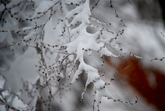 Four Gates Wellness Center - Winter